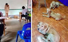 4 con chó lạc vào trường được cô giáo chăm sóc như thú cưng, ít lâu sau chúng đẻ thêm một đàn con đông đúc