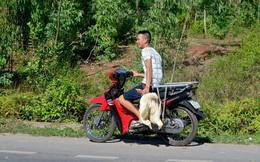Dân xúm lại 'hôi vịt' trên xe tải bị lật ở Quảng Bình: Công an vào cuộc điều tra
