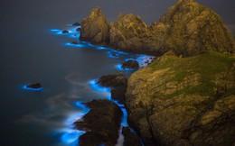 """""""Nước mắt xanh"""" ma quái lan rộng trên biển Trung Quốc"""