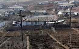 5.000 tấn gạo giúp nhân dân Triều Tiên khắc phục hậu quả thiên tai