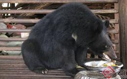 Chăm bẵm chó cưng suốt 2 năm trời, người đàn ông mới phát hiện hóa ra nó là... gấu đen