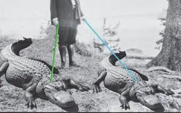 Những con cá sấu trong Nhà Trắng: Giai thoại buồn cười về những con thú cưng của tổng thống Mỹ trong lịch sử