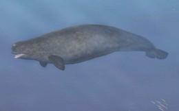 Quái vật biển kỳ dị là con lai của 2 loài khác nhau