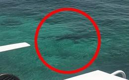 Lặn ngắm san hô, cô gái 21 tuổi mất mạng vì bị đàn cá mập tấn công, mẹ trên bờ bất lực gào thét nhìn con bị cắn xé