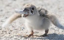 Thực trạng báo động sau bức ảnh chim mẹ mớm thuốc lá vào miệng con non