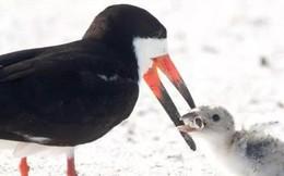 """Bức ảnh chim mẹ mớm con ăn... đầu lọc thuốc lá khiến loài người phải suy ngẫm: Chúng ta đã """"đầu độc"""" thiên nhiên đến mức báo động!"""