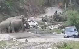 VIDEO: Sửng sốt cảnh đàn voi tức giận đẩy nhiều xe ô tô khỏi lề đường