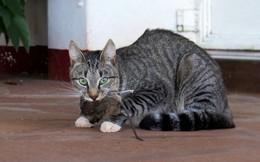 Chán cảnh mèo tha động vật chết về nhà, kỹ sư Amazon chế cửa mèo chui điều khiển bằng... AI