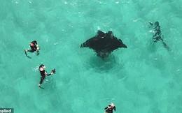 Cảnh cá đuối cầu cứu thợ lặn vì không thể lấy được lưỡi câu mắc sâu vào mắt khiến người xem bất ngờ