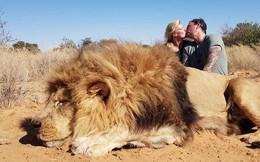 Cặp đôi Canada bị người yêu động vật kịch liệt lên án vì khóa môi bên xác sư tử quý hiếm vừa săn