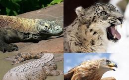 Top 9 loài động vật săn mồi đáng sợ nhất thế giới tự nhiên