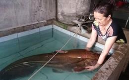 Vật lộn nhiều giờ mới đưa được con cá leo 80kg lên bờ