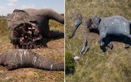 Tấm hình này đã bóc trần sự tàn nhẫn của nạn săn trộm thú hiếm, và nó đang khiến cả thế giới phẫn nộ
