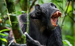 Sự đánh đố từ 5 hành vi rất đời thường của các loài động vật: Khoa học đang chẳng hiểu tại sao chúng làm thế