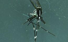 Thả 200 triệu con muỗi thí nghiệm vào tự nhiên, Trung Quốc quét sạch muỗi vằn trên 2 hòn đảo