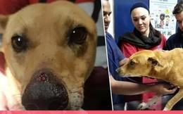 Liều mạng cứu chủ khỏi những tên cướp, chú chó bị bắn vào mũi và cái kết không thể đẹp hơn