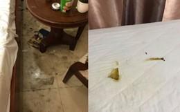 Cặp đôi lén lút mang chó vào khách sạn, ra về để lại 'căn phòng kinh hãi'