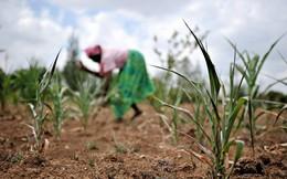 Biến đổi khí hậu sẽ khiến hàng tỷ người thiếu hụt chất dinh dưỡng vì thực phẩm nghèo nàn