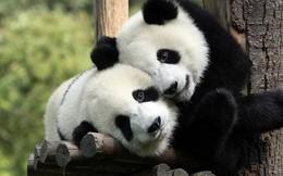 Tan chảy trước tình yêu ngọt ngào và dễ thương của các loài động vật