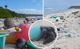 Phát hiện lượng rác nhựa khổng lồ tại hòn đảo thiên đường không người ở giữa Thái Bình Dương: 30 năm trôi qua trông vẫn như mới