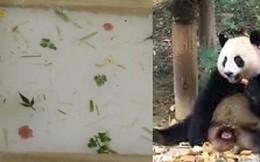 Tôn sùng gấu trúc quá mức, sở thú Trung Quốc lấy phân gấu chế biến thành quà lưu niệm tặng cho du khách gây ra nhiều tranh cãi