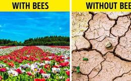 Ong mật trên thế giới đang có nguy cơ tuyệt chủng cực lớn và đây là lý do chúng ta không thể để điều đó xảy ra