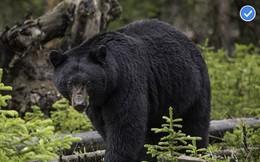 Cha bỏ rơi con trong rừng đầy gấu hoang để 'trừng phạt'