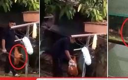 Phẫn nộ trước cảnh người đàn ông dùng gậy đập chết 2 con chó nhỏ, ai can cũng không được