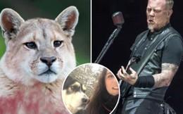 Bị báo sư tử săn đuổi, cô gái nhanh trí cứu bản thân lẫn pet 'ngáo' husky thoát chết nhờ... bài nhạc rock bùng cháy