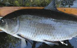 Khó tin nhưng có thật: Con cá này đã tồn tại trước cả khi thảm họa Titanic xảy ra, và nó khiến quan điểm về cá của giới khoa học phải thay đổi toàn bộ