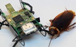 Gián thường chưa đủ hay sao mà giờ còn có cả gián robot chạy siêu nhanh, giẫm không chết?