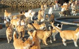 Hàng loạt mèo chết bí ẩn ở đảo mèo Nhật Bản