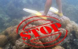 'Chỉ đặt nhẹ thanh sắt cũng khiến san hô chết đi' - Loài vật này liệu có dễ bị tổn thương đến thế?