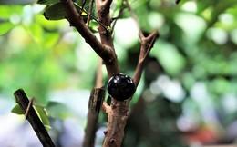"""""""Độc chiêu"""" kiếm thêm tiền nhờ việc trồng cây """"ngoại"""" trong vườn nhà"""
