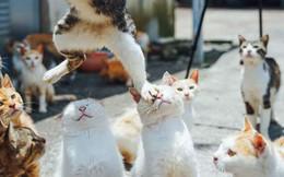 """Hài hước những khoảnh khắc """"đúng thời điểm"""" của các loài động vật"""