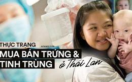 Thị trường mua bán trứng và tinh trùng phi pháp ở Thái Lan: Người người 'săn giống' đẹp và thông minh giá nghìn đô của người mẫu và nam sinh y khoa