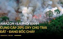 Tình hình cháy rừng tại Amazon đang trầm trọng đến mức nào: 8 tháng 100.000 vụ cháy, thảm họa ở tầm cỡ địa cầu