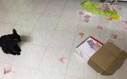 Người phụ nữ tìm ra 'quỹ đen' của chồng nhờ hành động vô tình của Boss khiến dân mạng phát cuồng đua nhau đòi nuôi mèo