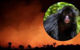 10% loài động vật trên hành tinh như sống trong 'hỏa ngục' vì cháy rừng Amazon: Hậu quả kinh khủng hơn bất kì vụ cháy rừng nào khác