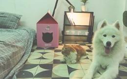 Chàng trai độc thân với một căn phòng nhỏ, một chú chó, một bé mèo: Định nghĩa bình yên kiểu mới là đây!