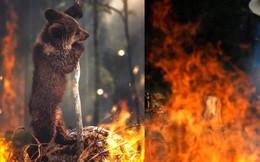 Sự thật về bức ảnh chú gấu nhỏ tuyệt vọng trong biển lửa của trận cháy rừng Amazon