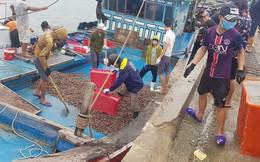 Ngư dân Hà Tĩnh 'trúng mánh', mỗi ngày thu đến 20 triệu từ ốc xoắn, sò nhám