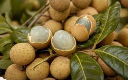 Quả nhãn là vị thuốc quý, xứng đáng được người Việt sủng ái nhưng 4 nhóm người này thèm mấy cũng không nên ăn