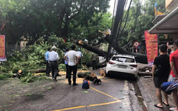 Hải Phòng: Một người phụ nữ bị thương do cây đổ trong mưa