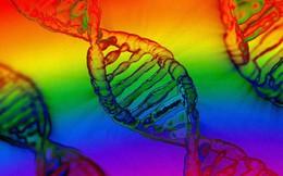 """Có hay không """"gene đồng tính""""? Nghiên cứu quy mô NỬA TRIỆU người cuối cùng đã đưa ra kết luận chính thức"""