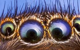 Bạn có sợ nhện không? Nếu có thì chỉ mất 7s thôi, có khi bạn yêu chúng nó luôn