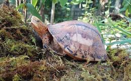 Ba loài rùa ở Việt Nam được cảnh báo nguy cơ tuyệt diệt