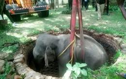 Xem giải cứu voi khổng lồ rơi xuống giếng sâu 6 mét