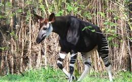 Top 10 loài động vật chỉ có thể tìm thấy ở Châu Phi