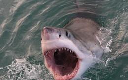 Khoảnh khắc kinh hoàng khi cá mập trắng tấn công ngư dân Mỹ